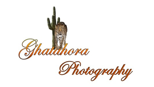 Bhupinder Ghatahora, Female Photographer based near Basingstoke. Ghatahora Photography