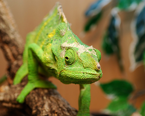 IMG7487 