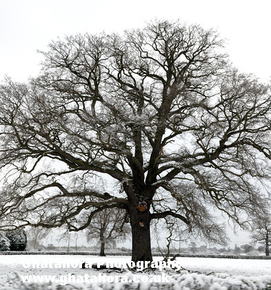 DSC7202 